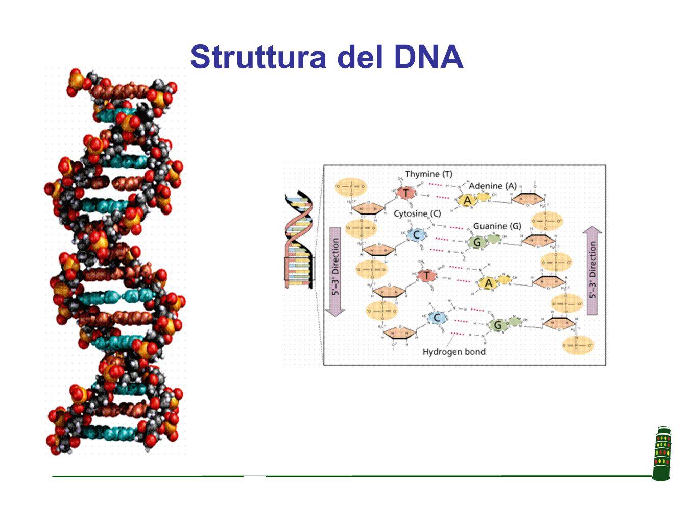 Trascrittoma L insieme di RNA messaggeri espressi da ogni cellula Proteoma L insieme di proteine espresse da ogni cellula
