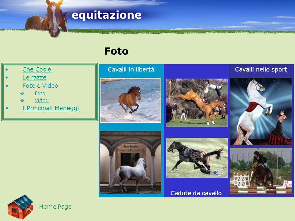 Cavalli nello sport Cadute da cavallo Cavalli in libertà equitazione Foto Che Cos'è Le razze Foto e Video  Foto  Video Video I Principali Maneggi Home Page