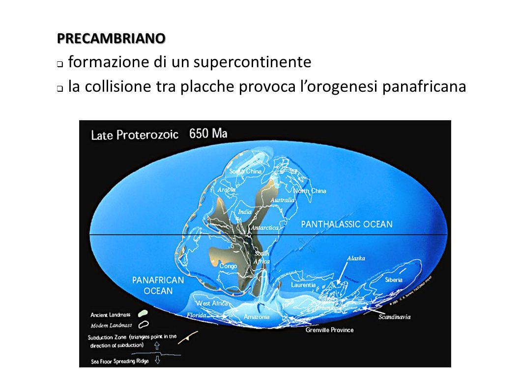 CAMBRIANO  il supercontinente Gondwana occupa l'emisfero sud  attorno all'equatore si trovano tre continenti  la collisione tra Nordamerica e Europa provoca l'orogenesi caledonica e la chiusura del Protoatlantico, dando origine a un unico continente (Laurussia)