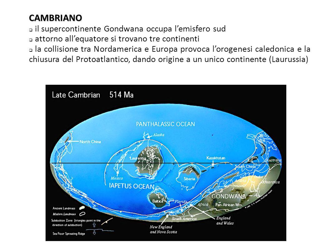 CAMBRIANO  il supercontinente Gondwana occupa l'emisfero sud  attorno all'equatore si trovano tre continenti  la collisione tra Nordamerica e Europ