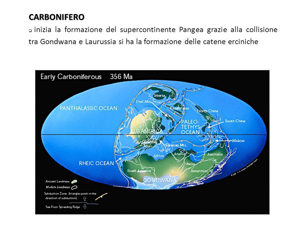CARBONIFERO  inizia la formazione del supercontinente Pangea grazie alla collisione tra Gondwana e Laurussia si ha la formazione delle catene ercinic