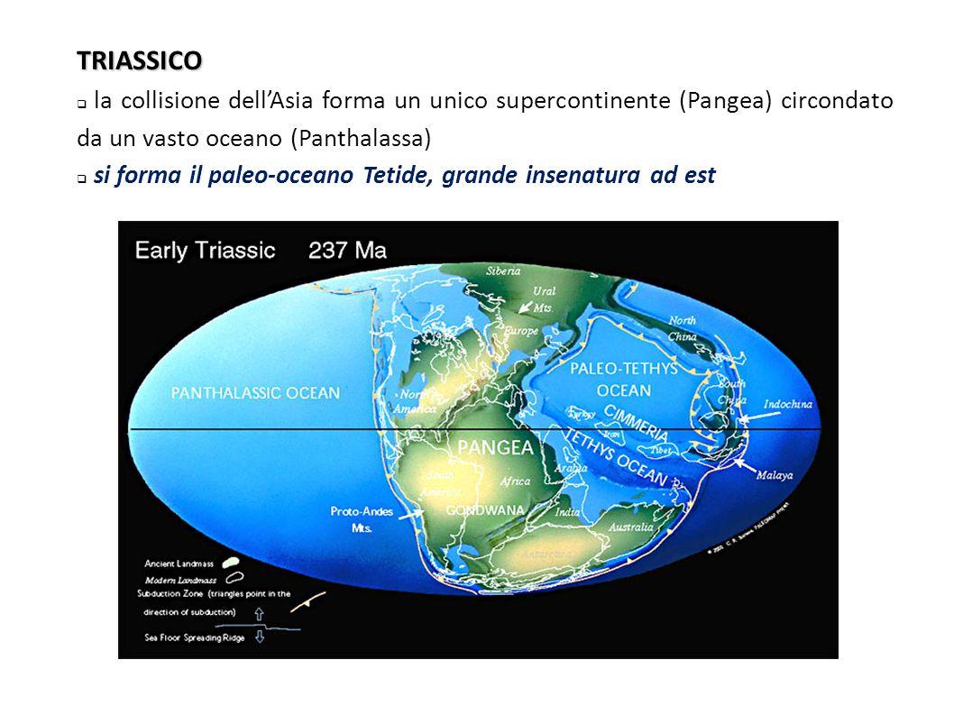 TRIASSICO  la collisione dell'Asia forma un unico supercontinente (Pangea) circondato da un vasto oceano (Panthalassa)  si forma il paleo-oceano Te