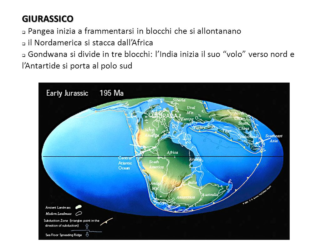 GIURASSICO  Pangea inizia a frammentarsi in blocchi che si allontanano  il Nordamerica si stacca dall'Africa  Gondwana si divide in tre blocchi: l'