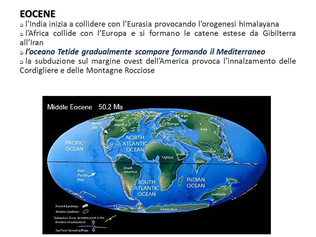 EOCENE  l'India inizia a collidere con l'Eurasia provocando l'orogenesi himalayana  l'Africa collide con l'Europa e si formano le catene estese da G
