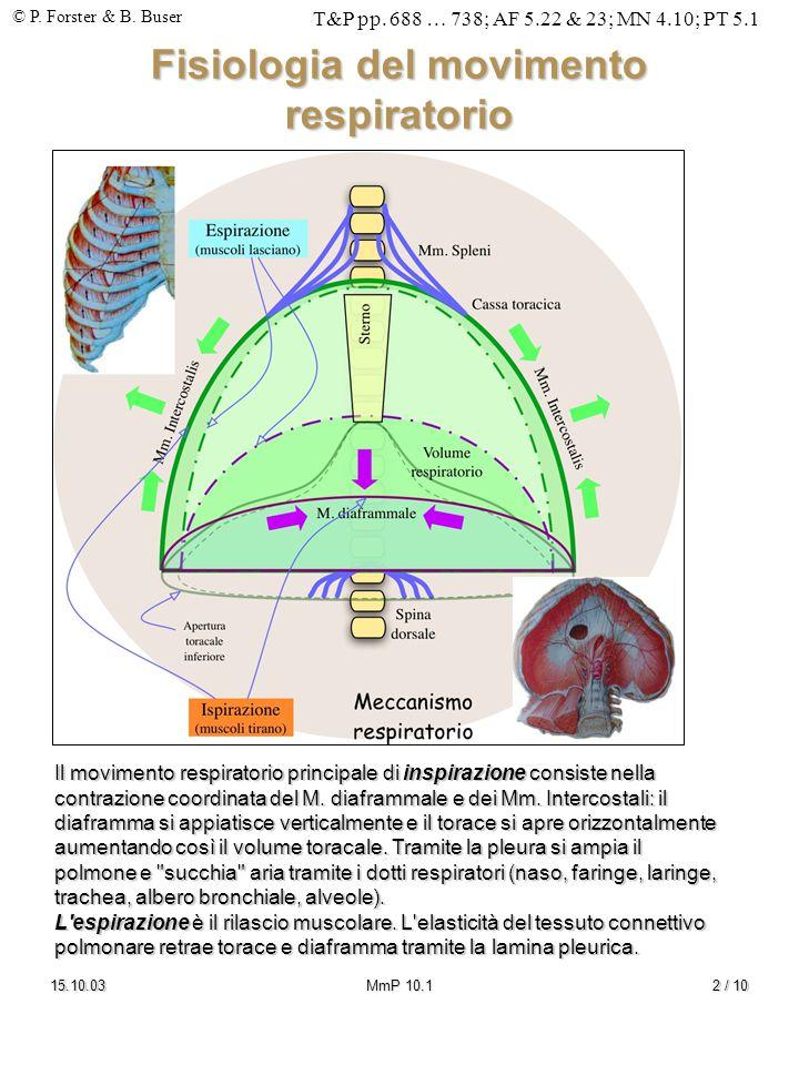 © P. Forster & B. Buser T&P pp. 688 … 738; AF 5.22 & 23; MN 4.10; PT 5.1 15.10.03MmP 10.12 / 10 Fisiologia del movimento respiratorio Il movimento res