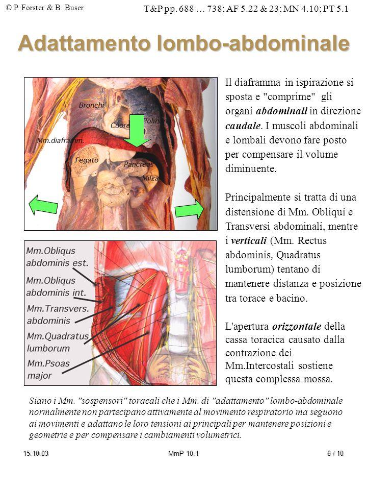 © P. Forster & B. Buser T&P pp. 688 … 738; AF 5.22 & 23; MN 4.10; PT 5.1 15.10.03MmP 10.16 / 10 Adattamento lombo-abdominale Il diaframma in ispirazio
