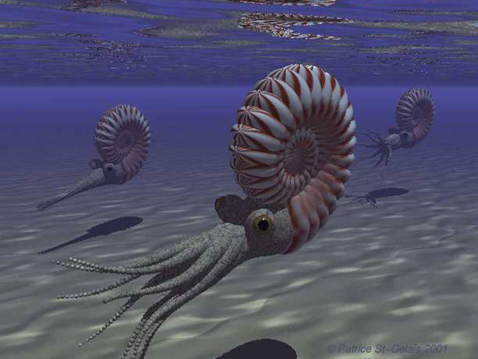Sister group dei Gastropoda o degli Scaphopoda+Bivalvia?)