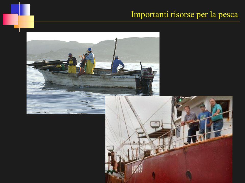 Importanti risorse per la pesca