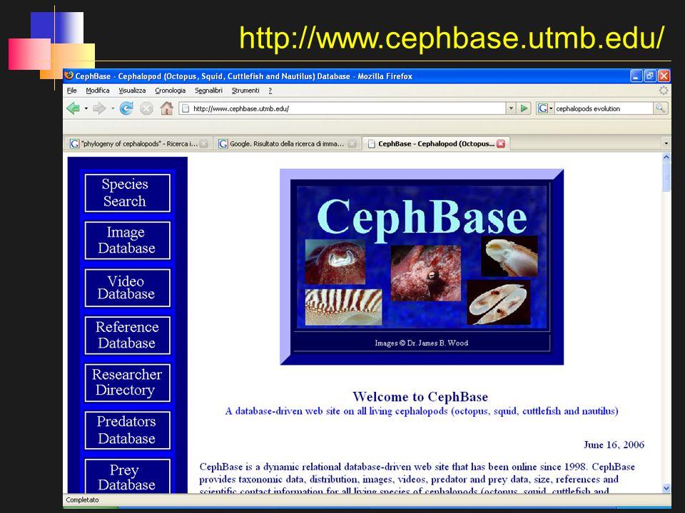 http://www.cephbase.utmb.edu/