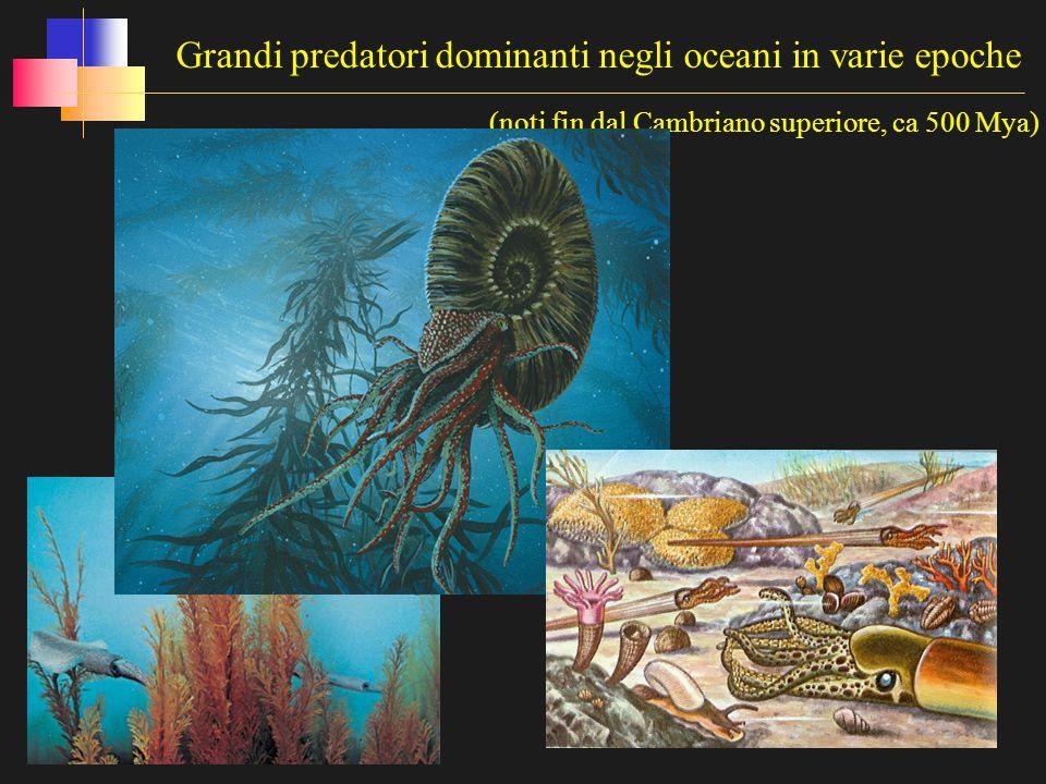 Grandi predatori dominanti negli oceani in varie epoche (noti fin dal Cambriano superiore, ca 500 Mya)