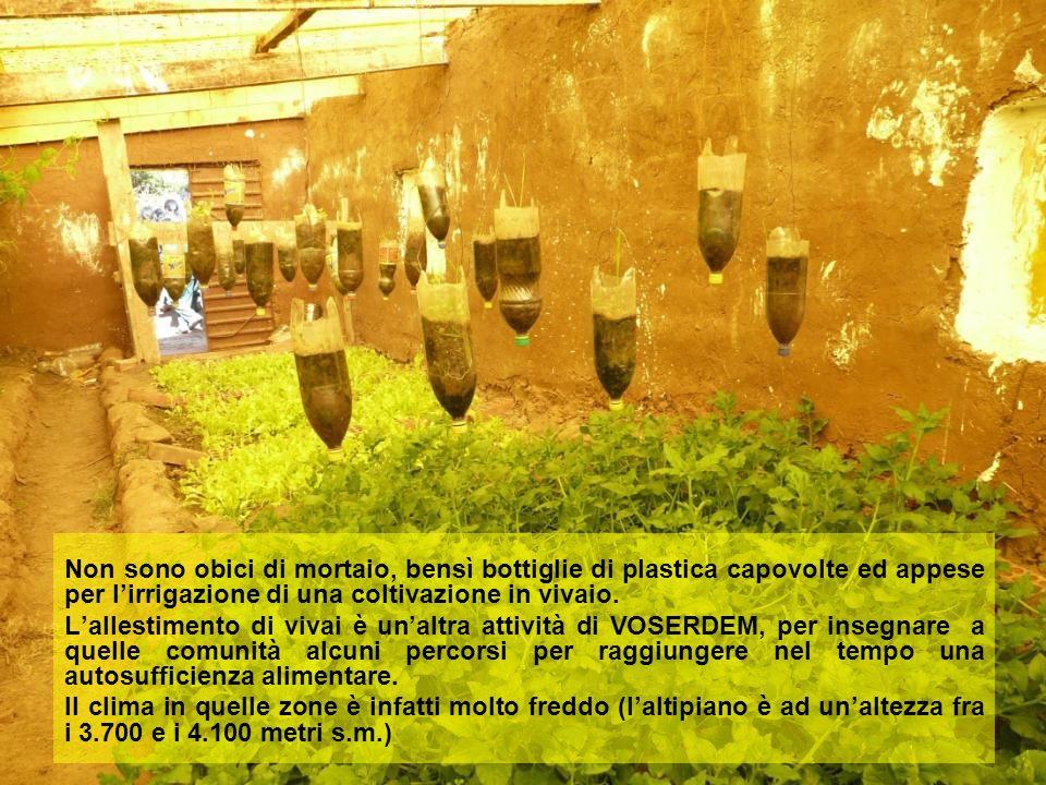 Non sono obici di mortaio, bensì bottiglie di plastica capovolte ed appese per l'irrigazione di una coltivazione in vivaio. L'allestimento di vivai è
