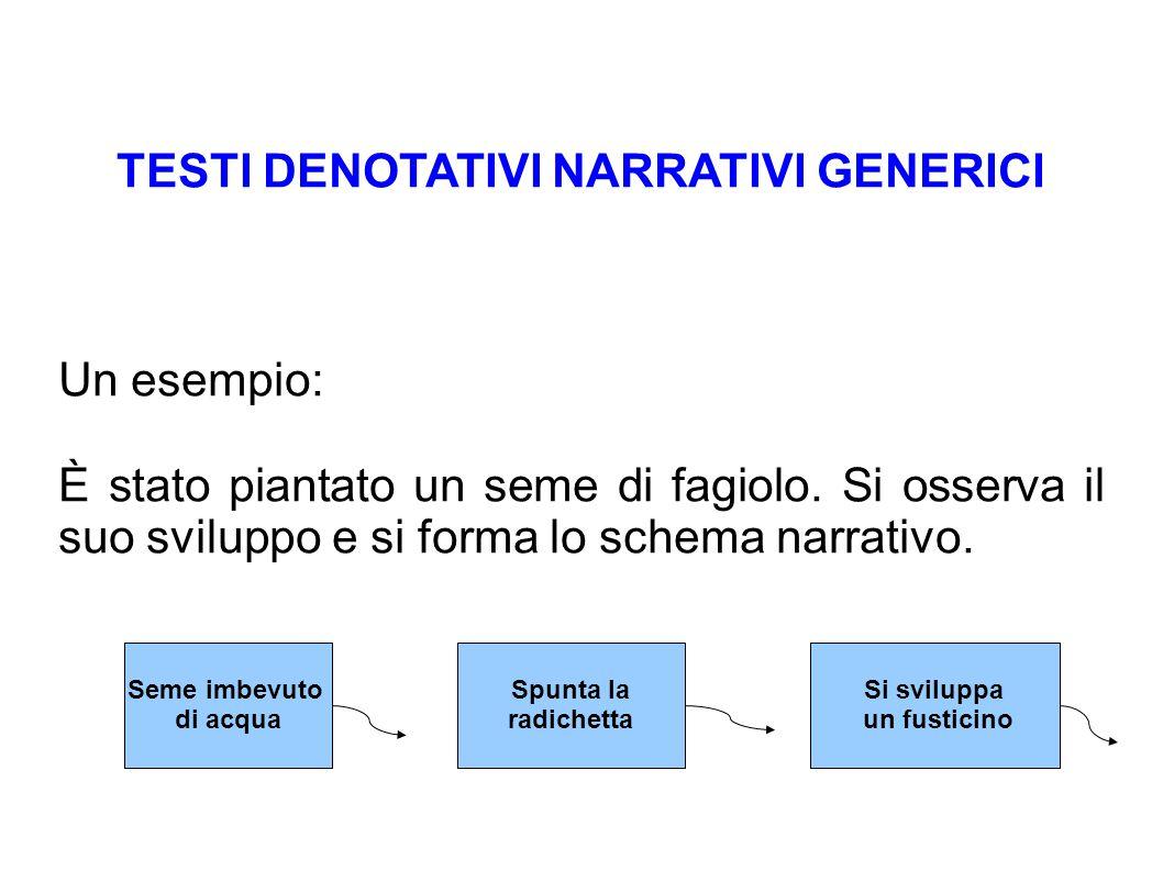 TESTI DENOTATIVI NARRATIVI GENERICI Un esempio: È stato piantato un seme di fagiolo. Si osserva il suo sviluppo e si forma lo schema narrativo. Seme i