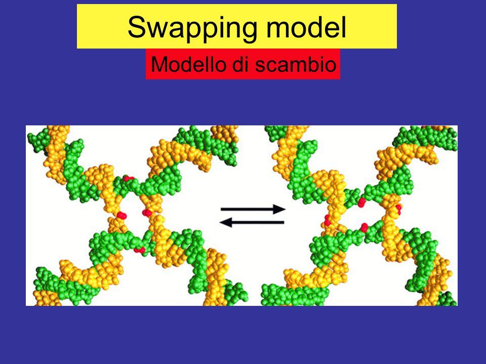 Swapping model Modello di scambio
