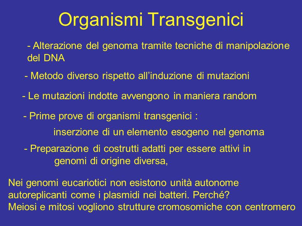 OGM e organismi transgenici modi di dire e luoghi comuni confusioni mediatiche un OGM è anche un batterio che ha subito mutagenesi o in cui abbiamo inserito un plasmide o un vettore di espressione adesso i giornali chiamano OGM gli organismi vegetali trasformati o ricombinanti per un gene esogeno