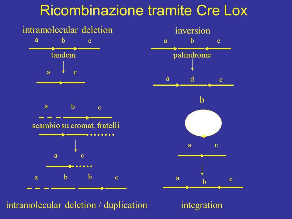 intramolecular deletion inversion intramolecular deletion / duplication b cba a b c ac b ac a b c integration abc a b c ac a d c tandempalindrome scam