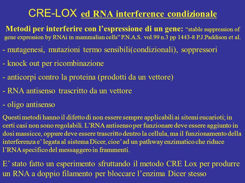 """Metodi per interferire con l'espressione di un gene: """"stable suppression of gene expression by RNAi in mammalian cells"""" P.N.A.S. vol.99 n.3 pp 1443-8"""
