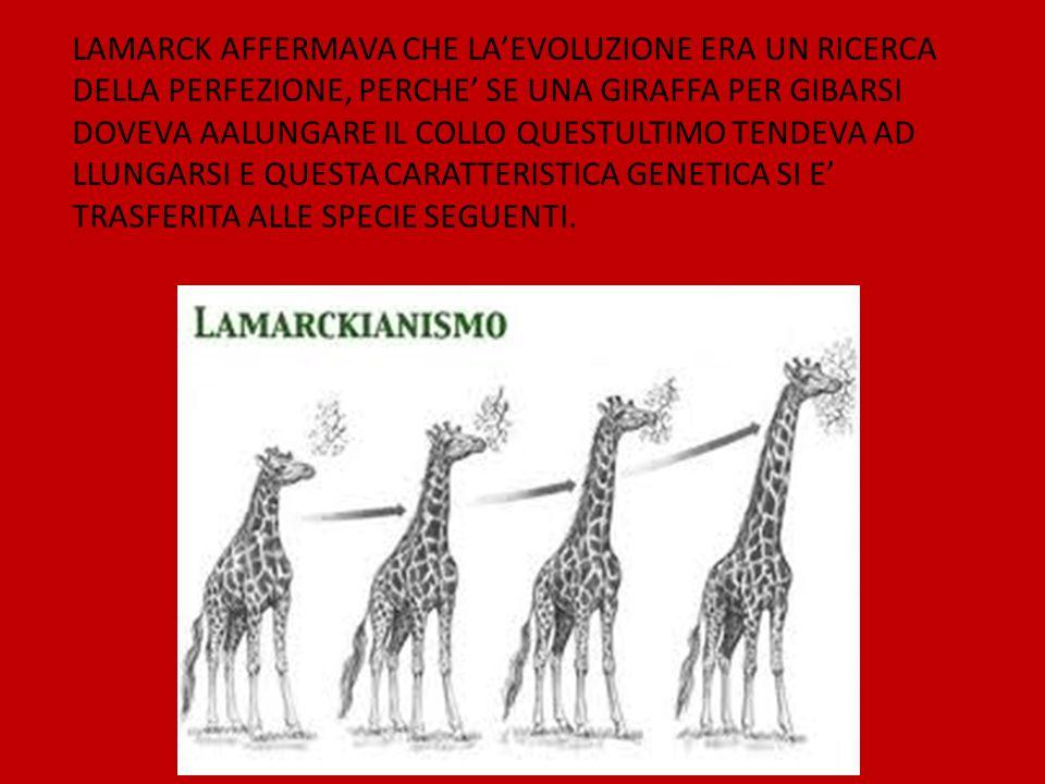 LAMARCK AFFERMAVA CHE LA'EVOLUZIONE ERA UN RICERCA DELLA PERFEZIONE, PERCHE' SE UNA GIRAFFA PER GIBARSI DOVEVA AALUNGARE IL COLLO QUESTULTIMO TENDEVA AD LLUNGARSI E QUESTA CARATTERISTICA GENETICA SI E' TRASFERITA ALLE SPECIE SEGUENTI.