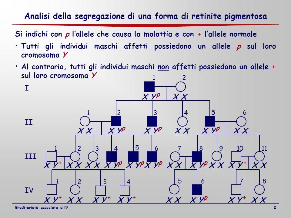 I II III IV 12 1234 1234 5 67891011 1 2 5678 56 34 X X Y X X Y X X YX X Y X X Y Tutti gli individui maschi affetti possiedono un allele p sul loro cromosoma Y Si indichi con p l'allele che causa la malattia e con + l'allele normale Al contrario, tutti gli individui maschi non affetti possiedono un allele + sul loro cromosoma Y + p ppp pppp p + ++++ Analisi della segregazione di una forma di retinite pigmentosa Ereditarietà associata all'Y2