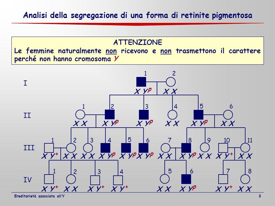 I II III IV 12 1234 1234 5 67891011 1 2 5678 56 34 X X Y X X Y X X YX X Y X X Y ATTENZIONE Le femmine naturalmente non ricevono e non trasmettono il carattere perché non hanno cromosoma Y + p ppp pppp p + ++++ Analisi della segregazione di una forma di retinite pigmentosa Ereditarietà associata all'Y3