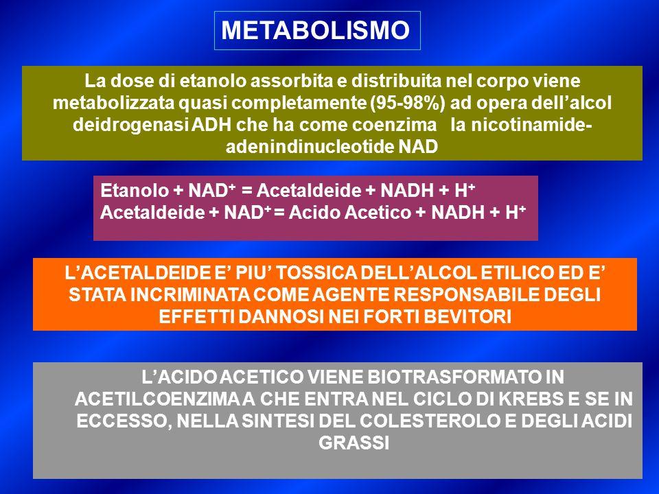 METABOLISMO La dose di etanolo assorbita e distribuita nel corpo viene metabolizzata quasi completamente (95-98%) ad opera dell'alcol deidrogenasi ADH