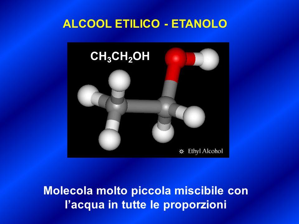 ALCOOL ETILICO - ETANOLO Molecola molto piccola miscibile con l'acqua in tutte le proporzioni CH 3 CH 2 OH
