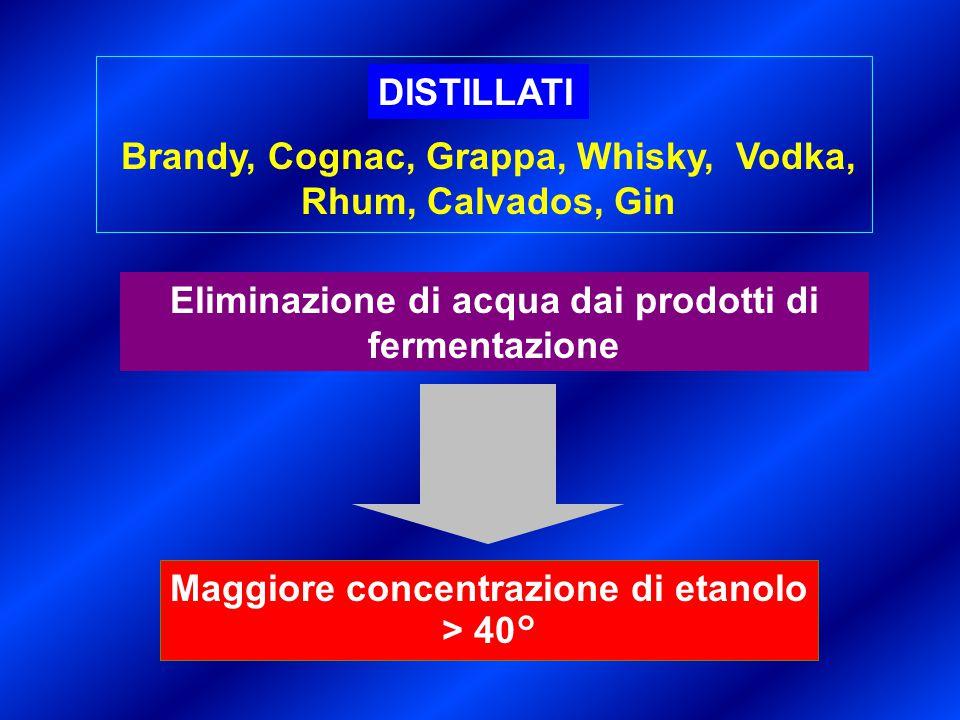 Maggiore concentrazione di etanolo > 40° Eliminazione di acqua dai prodotti di fermentazione DISTILLATI Brandy, Cognac, Grappa, Whisky, Vodka, Rhum, C