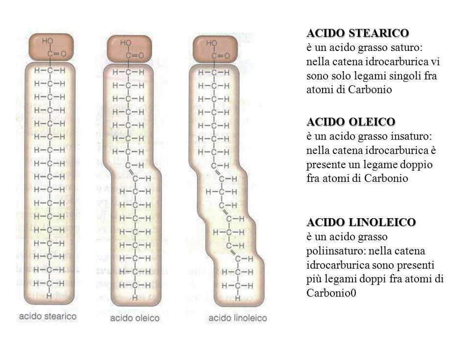ACIDO STEARICO è un acido grasso saturo: nella catena idrocarburica vi sono solo legami singoli fra atomi di Carbonio ACIDO OLEICO è un acido grasso i