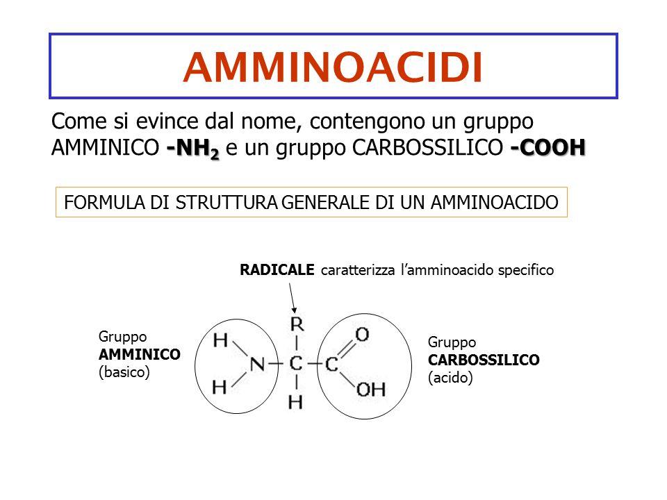 AMMINOACIDI -NH 2 -COOH Come si evince dal nome, contengono un gruppo AMMINICO -NH 2 e un gruppo CARBOSSILICO -COOH FORMULA DI STRUTTURA GENERALE DI U