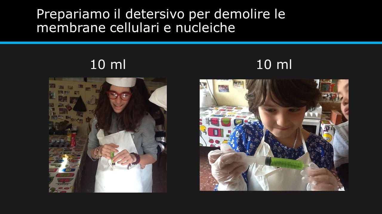 Prepariamo il detersivo per demolire le membrane cellulari e nucleiche 10 ml