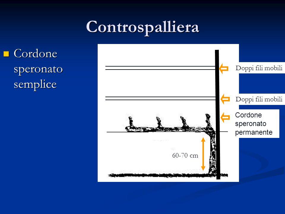 Controspalliera Cordone speronato semplice Cordone speronato semplice Doppi fili mobili Cordone speronato permanente Doppi fili mobili 60-70 cm