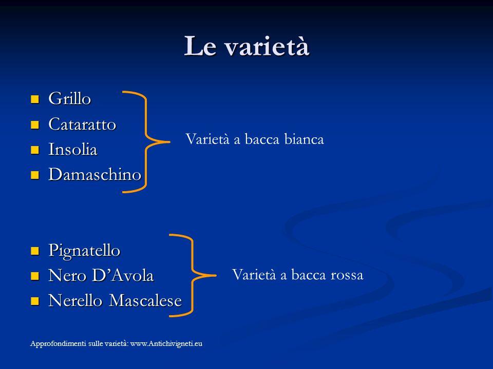 Le varietà Grillo Grillo Cataratto Cataratto Insolia Insolia Damaschino Damaschino Pignatello Pignatello Nero D'Avola Nero D'Avola Nerello Mascalese N