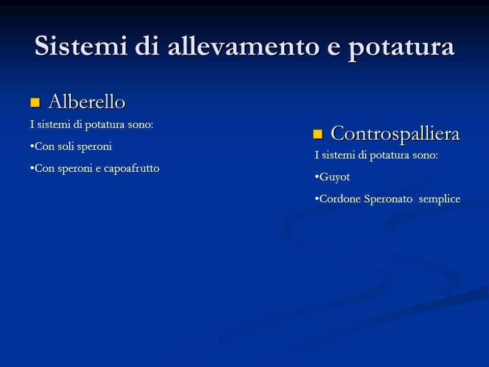 Sistemi di allevamento e potatura Alberello Alberello Controspalliera Controspalliera I sistemi di potatura sono: Guyot Cordone Speronato semplice I s