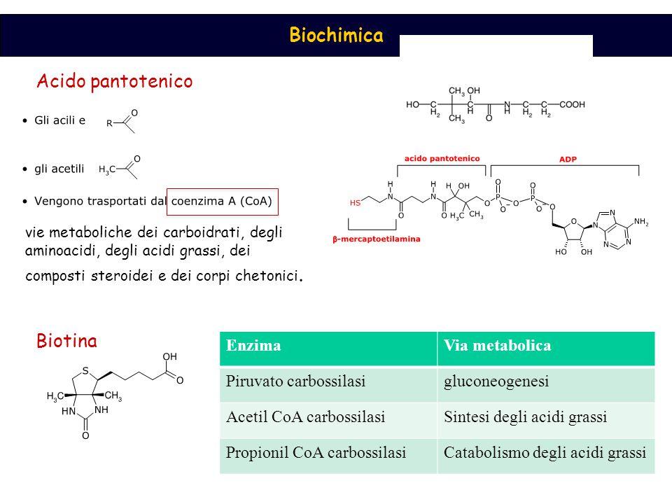 Biochimica Acido pantotenico Biotina vie metaboliche dei carboidrati, degli aminoacidi, degli acidi grassi, dei composti steroidei e dei corpi chetoni