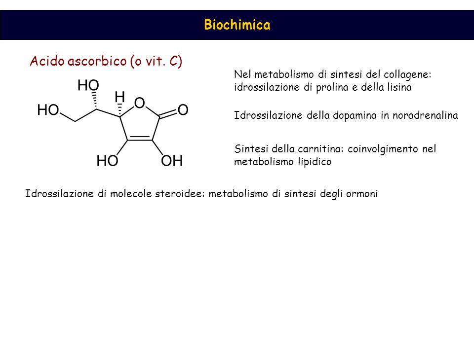 Biochimica Acido ascorbico (o vit. C) Nel metabolismo di sintesi del collagene: idrossilazione di prolina e della lisina Idrossilazione della dopamina