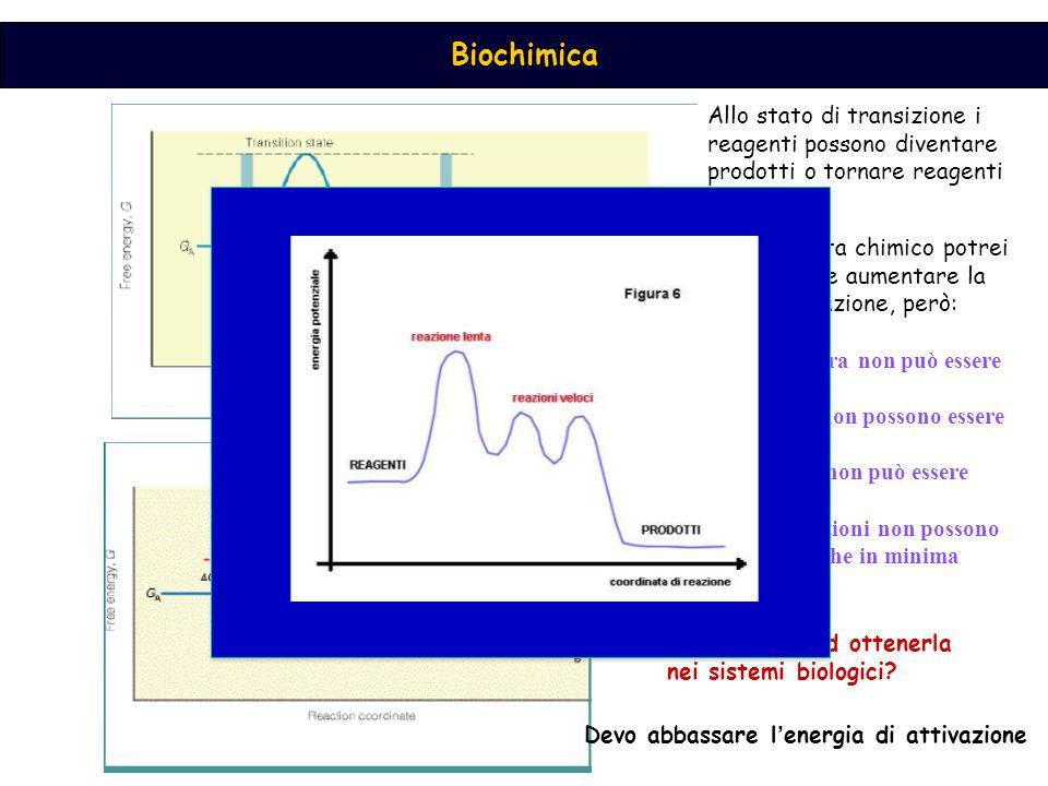 Biochimica Allo stato di transizione i reagenti possono diventare prodotti o tornare reagenti Energia di attivazione Dal p.to di vista chimico potrei
