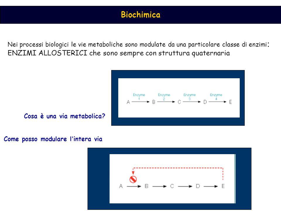 Biochimica Nei processi biologici le vie metaboliche sono modulate da una particolare classe di enzimi : ENZIMI ALLOSTERICI che sono sempre con strutt