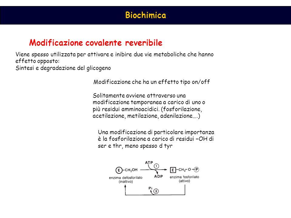 Biochimica Modificazione covalente reveribile Modificazione che ha un effetto tipo on/off Solitamente avviene attraverso una modificazione temporanea