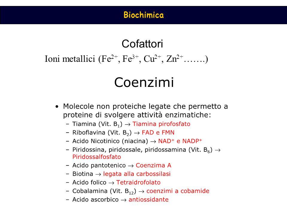 Biochimica Cofattori Ioni metallici (Fe 2+, Fe 3+, Cu 2+, Zn 2+ …….)
