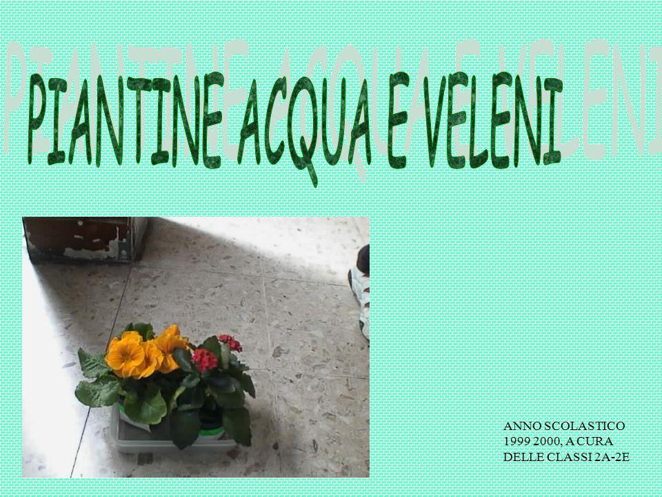 ANNO SCOLASTICO 1999 2000, A CURA DELLE CLASSI 2A-2E