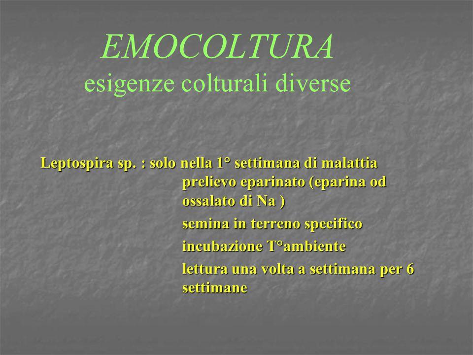 EMOCOLTURA esigenze colturali diverse Leptospira sp. : solo nella 1° settimana di malattia prelievo eparinato (eparina od ossalato di Na ) semina in t