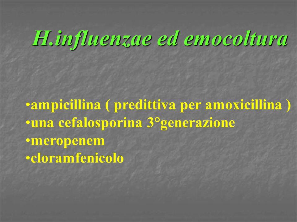 H.influenzae ed emocoltura ampicillina ( predittiva per amoxicillina ) una cefalosporina 3°generazione meropenem cloramfenicolo