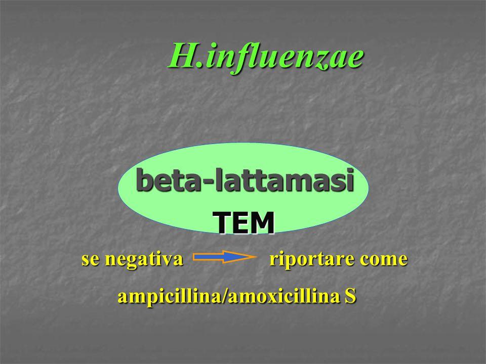 H.influenzae beta-lattamasiTEM se negativa riportare come ampicillina/amoxicillina S