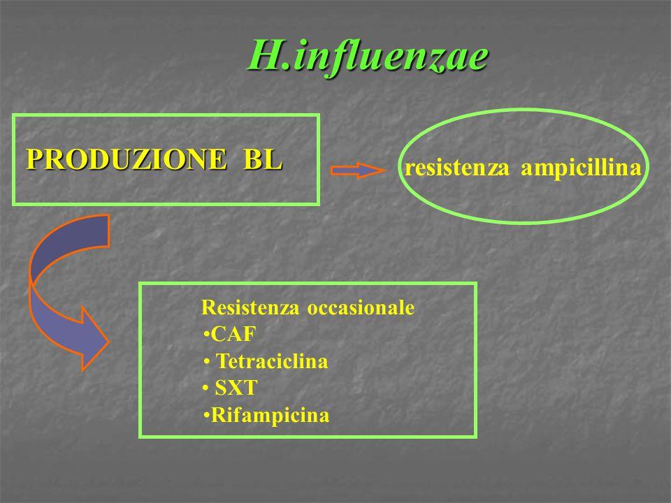 H.influenzae PRODUZIONE BL Resistenza occasionale CAF Tetraciclina SXT Rifampicina resistenza ampicillina
