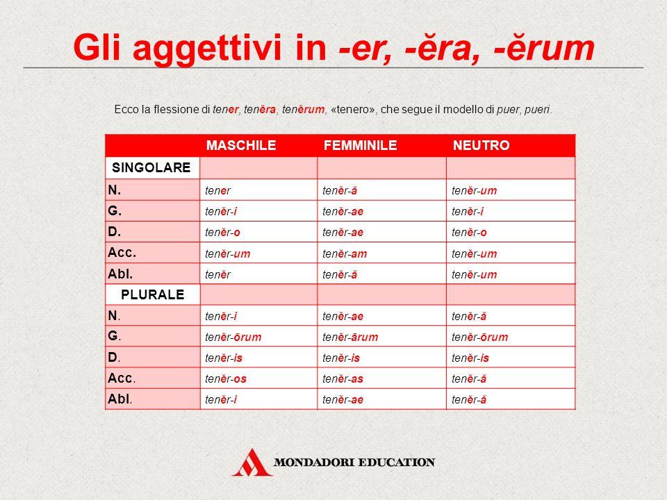 Gli aggettivi in -er, -ĕra, -ĕrum Gli aggettivi che al nominativo maschile singolare escono in -er si dividono in due gruppi: alcuni di essi mantengon