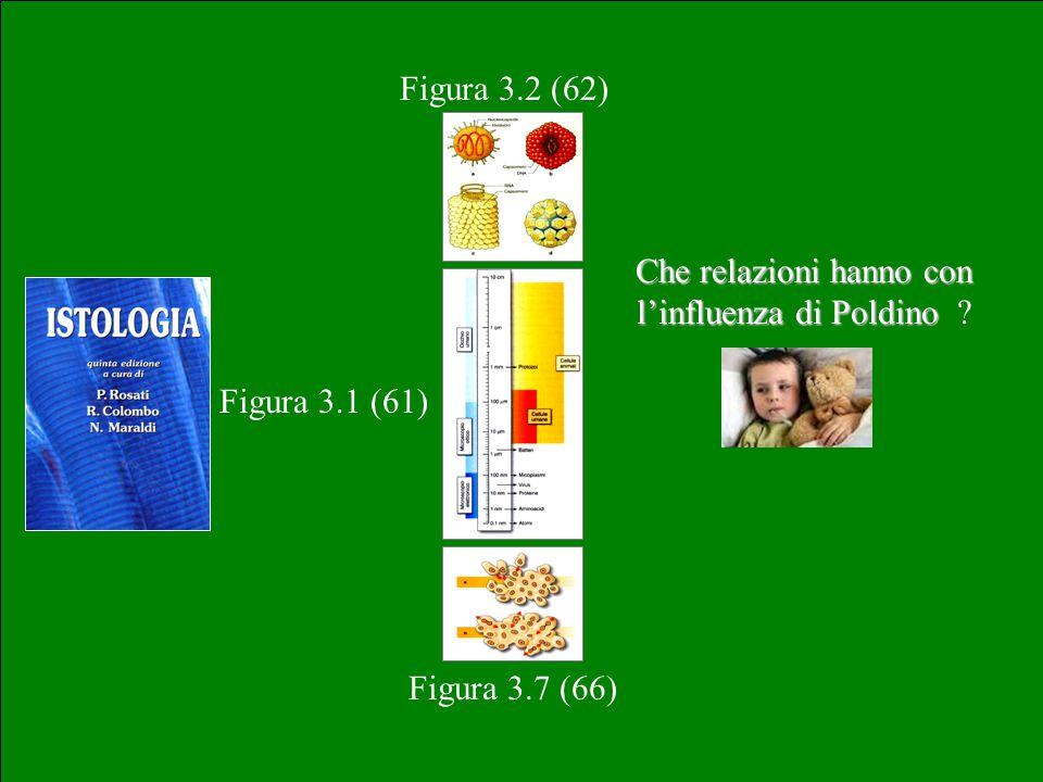 Figura 3.1 (61) Figura 3.2 (62) Figura 3.7 (66) Che relazioni hanno con l'influenza di Poldino Che relazioni hanno con l'influenza di Poldino ?