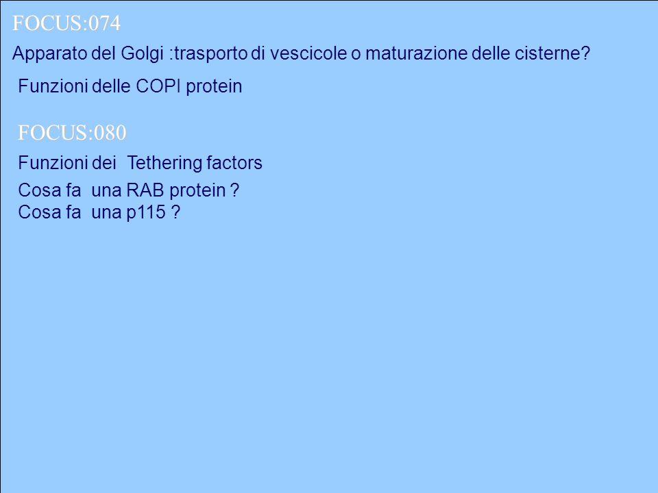 Apparato del Golgi :trasporto di vescicole o maturazione delle cisterne? FOCUS:074 FOCUS:080 Funzioni delle COPI protein Funzioni dei Tethering factor