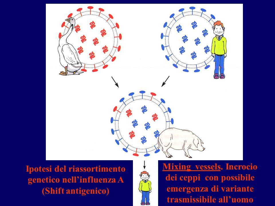 Ipotesi del riassortimento genetico nell'influenza A (Shift antigenico) Mixing vessels. Incrocio dei ceppi con possibile emergenza di variante trasmis