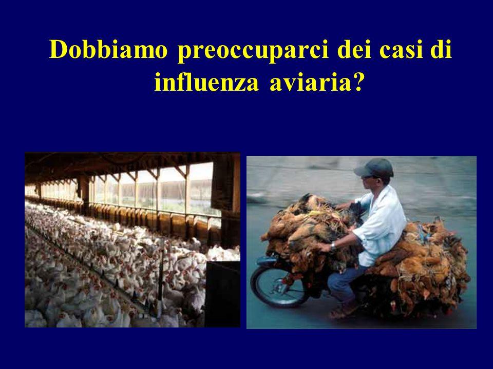 Dobbiamo preoccuparci dei casi di influenza aviaria?