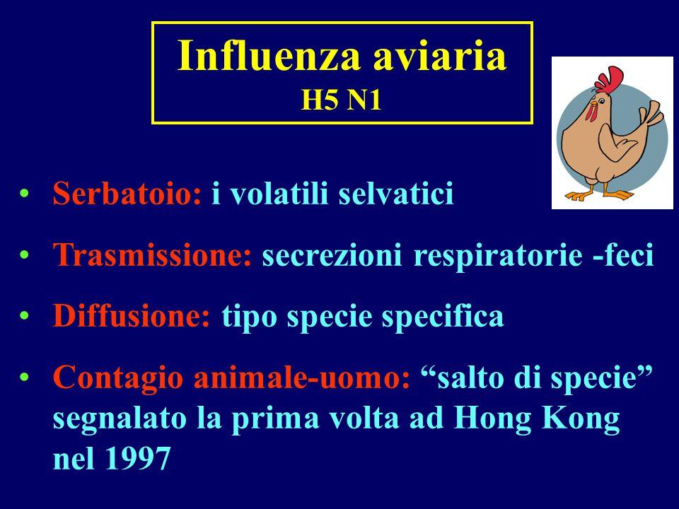 Influenza aviaria H5 N1 Serbatoio: i volatili selvatici Trasmissione: secrezioni respiratorie -feci Diffusione: tipo specie specifica Contagio animale