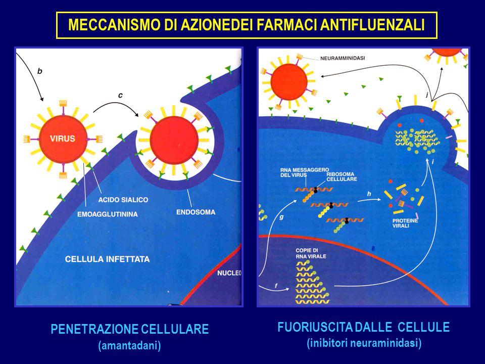 PENETRAZIONE CELLULARE (amantadani) FUORIUSCITA DALLE CELLULE (inibitori neuraminidasi) MECCANISMO DI AZIONEDEI FARMACI ANTIFLUENZALI